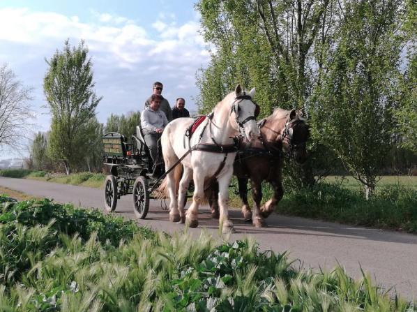 Passejada carruatges empordà