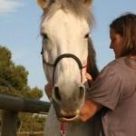 SÍLVIA MARTÍ KORF-   therapy Cranio-sacral EQUINE - veterinary medicine
